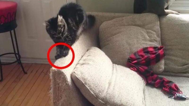 Pisica îi tot strica canapeaua din sufragerie aşa că s-a gândit să i-a măsuri: Ce a construit acest om pentru ea este cu adevărat FANTASTIC, cu siguranţă vei încerca şi tu!