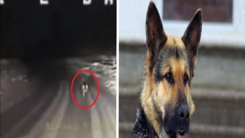 Pompierii au fost chemaţi la o casă care ARDEA şi nu ştiau exact drumul, dar când au văzut acest câine şi l-au urmărit... nu le-a venit să creadă unde i-a ghidat! Un adevărat EROU care a SALVAT viaţa stăpânului său