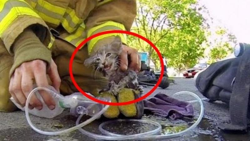 Sunt oameni şi sunt îngeri păzitori printre noi: Un ghemotoc de blană aproape mort zăcea pe podea fără SUFLARE, dar uite ce a făcut acest pompier pentru a SALVA bietul suflet muribund... SPECTACULOS