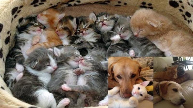 Işi filmează pisica care fată lângă un câine, dar ce surprinde pe cameră nu mi-a venit să cred! Ce face câinele pentru a ajuta pisica la naştere este pur şi simplu ADORABIL!
