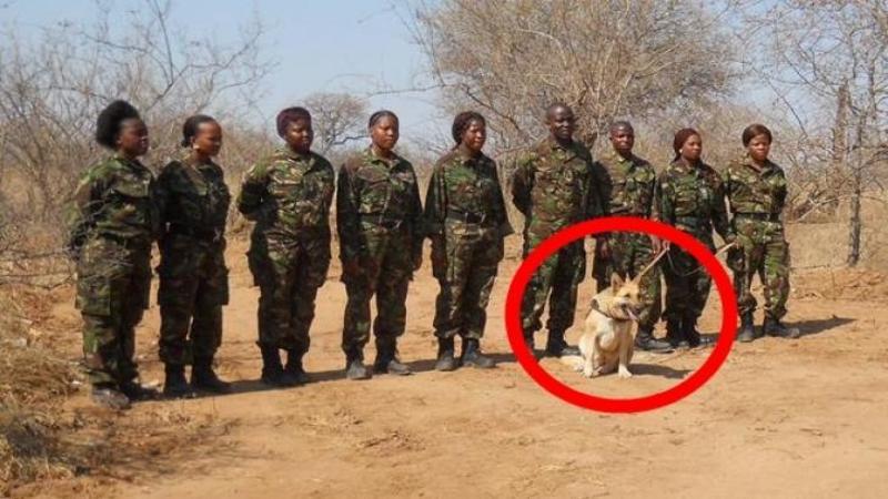 Jobul lui este să apere animalele din Africa aflate pe cale de dispariţie, iar curajul şi devotamentul de care dă dovadă acest câine sunt ieşite din comun, chiar şi în faţa unor BRACONIERI înarmaţi
