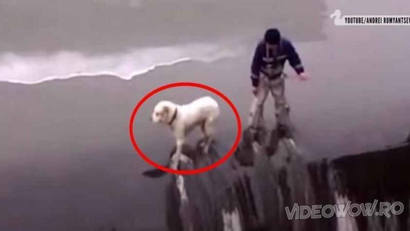 Se afla la doar câţiva centimetri de moarte pe marginea unei CASCADE periculoase! Dar când câinele îl vede lângă el... mi-a stat inima în loc! Ce s-a întâmplat apoi... Dumnezeule