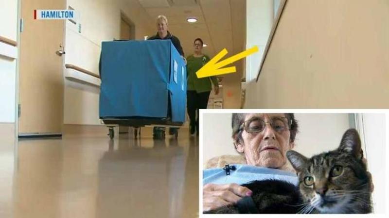 Doctorii plimbă acest CARUCIOR suspect pe holurile spitalului la fiecare bolnav: Ce se află în el este probabil cel mai bun medicament din întreaga lume... Nu vei crede cât de mult poate alina o boală chiar şi ea incurabilă!