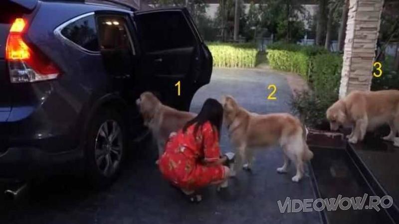 1, 2, 3 în şir indian toţi aşteptând semnalul stăpânei să urce în maşină: Când ai să vezi din ce cauză erau atât de cuminţi... nu mi-a venit să cred! Vreau şi eu ca, câinele meu să fie atât de disciplinat