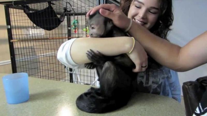 Au fost plecaţi de acasă timp de o lună iar când s-au întors au avut o mare surpriză din partea animalului de companie: Cum i-a întâmpinat această maimuţică pe cei doi stăpâni de care îi era dor... îţi va topi inima