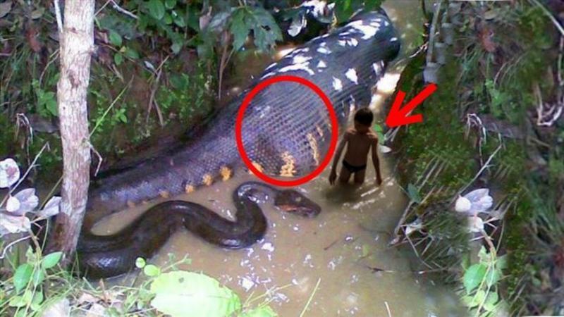 Au găsit un şarpe gigant ANACONDA mort: Când au văzut motivul pentru care a murit au rămas fără CUVINTE! Socant