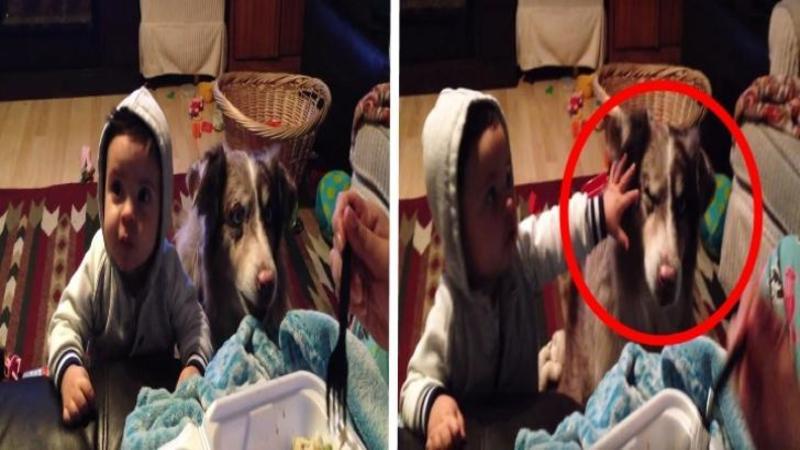 Mămica întinde furculiţa spre copilaşul ei şi îl roagă să spună ?mama?, dar aşteaptă să vezi reacţia câinelui aflat lângă el, este dea dreptul grozavă! Cine se gândea că în locul copilului, câinele rosteşte cuvântul mult aşteptat?