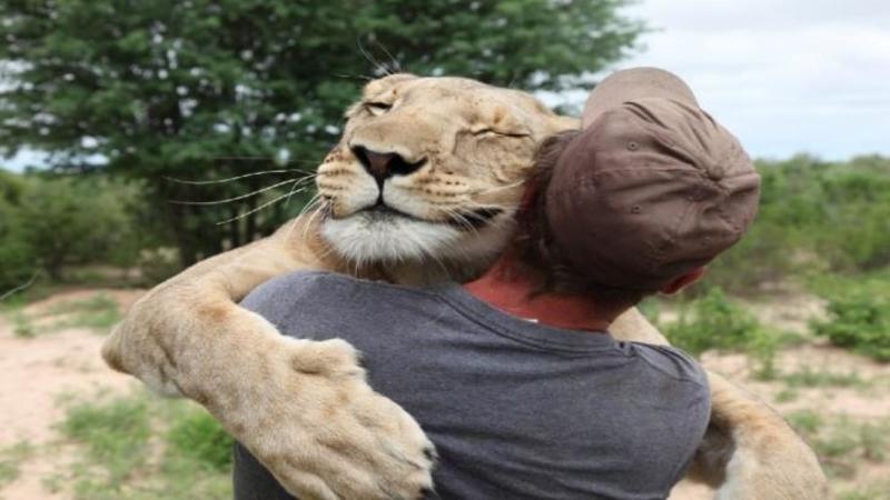Sare în braţele lui ca şi când ar fi ultima dată, iar legătura fantastică dintre cei doi este mai puternică decât orice: Când ai să vezi cum trăieşte, vânează şi se joacă acest om cu un LEU vei rămâne fără cuvinte... Fantastic