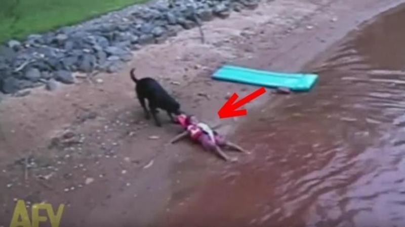Săracul copilaş era aproape înecat... până când intervine câinele şi îl salvează: Cum a reuşit să îl scoată la mal... este de necrezut! Uite cât de curajos este acest patruped
