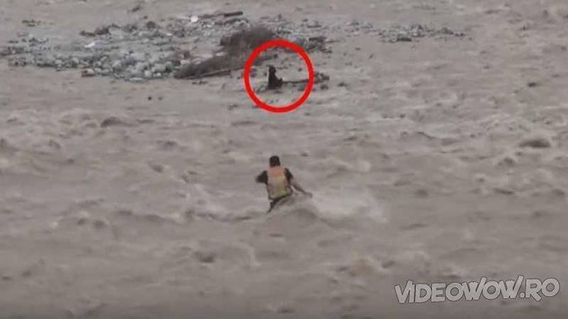 Au observat un CAINE în pericol chiar în mijlocul râului învolburat: Ce decizie au luat aceşti îngeri pentru a salva micuţul de la înec... Dumnezeule cât curaj şi iubire!
