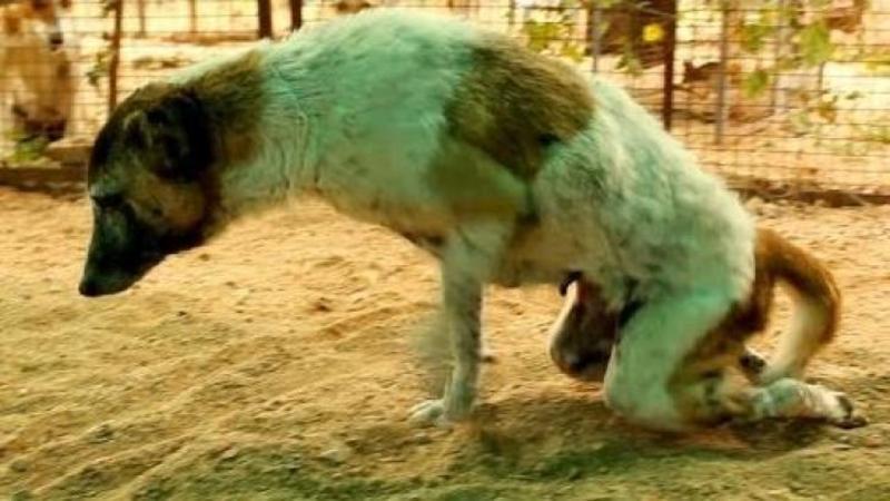 Accidentat şi cu picioarele ZDROBITE îşi dădea ultima suflare la marginea drumului, aşa l-au găsit pe acest biet câine! Dar Dumnezeu a vrut altă soartă pentru el! Ce s-a întâmplat după doar 10 zile de iubire şi îngrijire... Te va emoţiona până la lacrimi