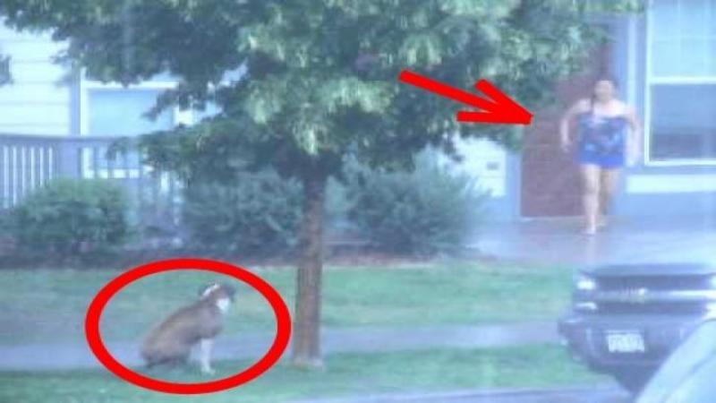 Un om fără suflet a abandonat şi LEGAT acest sărman câine de un pom chiar în momentul în care a început FURTUNA: Ce face vecina lui când vede bietul suflet în ploaie este cu adevărat EXTRAORDINAR, un gest emoţionant