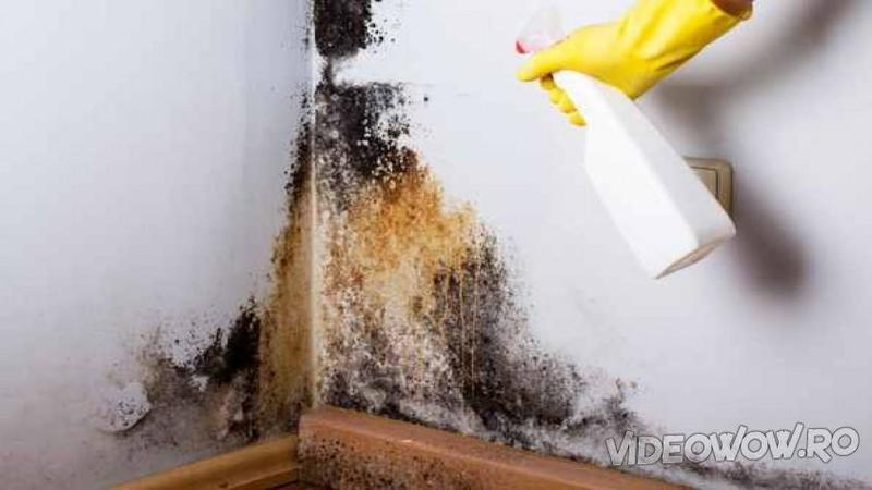 Amestecă apă OXIGENATA cu puţin detergent de vase şi pulverizează peste MUCEGAIUL de pe perete! După câteva minute nu mi-a venit să cred cum a dispărut toată negreala de acolo... WOW