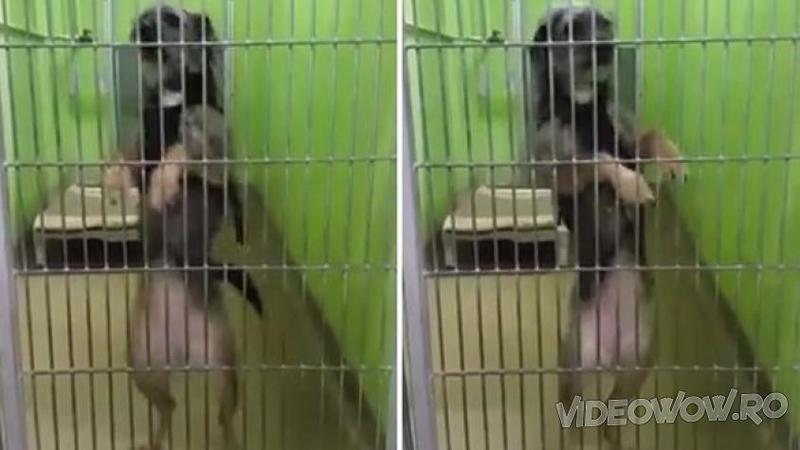 Tot ce vroia acest căţeluş era un nou cămin, dar când vizitatorii unui adăpost pentru animale l-au văzut făcând asta... WOW, imposibil să nu îl iei acasă!