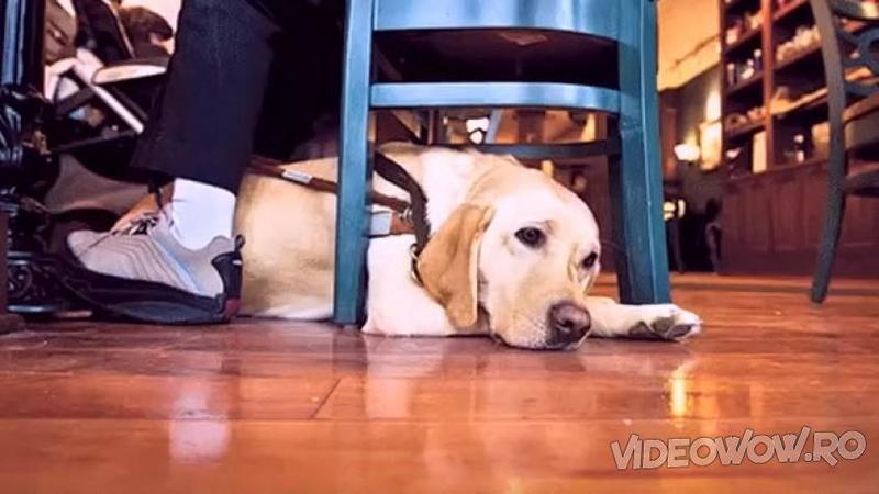 Niciodată nu am să mai privesc câinii cu aceiaşi ochi după ce am văzut acest videoclip! Mi-au dat lacrimile de emoţie... Dumnezeule cât adevăr