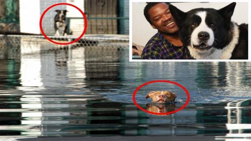 Au fost loviţi de URAGAN exact când se aşteptau cel mai puţin, dar când ai să vezi ce face acest om pentru câinele lui rămas în calea dezastrului... îţi va umple inima de bucurie şi emoţie!