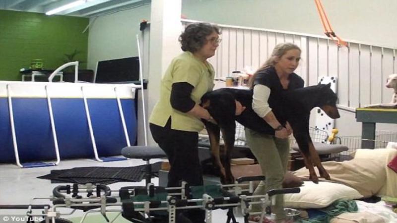 Se pregăteau să îl EUTANASIEZE datorită paraliziei la picioare, dar cineva îl salvează chiar în ultimul moment de la moarte - Ce se întâmplă apoi cu bietul câine i-a UIMIT până şi pe veterinari... ULUITOR