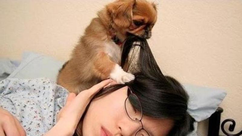 Ce fac aceşti câini stăpânilor lor este de neînchipuit! Sunt cele mai dulci ceasuri deşteptătoare din lume.