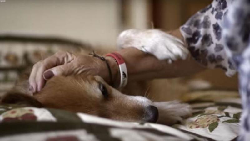 Nu avea nici o idee din ce cauză câinele ei era foarte supărat şi trist: Dar motivul din spatele acestor lucruri avea să îi SALVEZE viaţa! Ce s-a întâmplat era defapt un motiv... pe care ar trebui să îl luăm toţi în serios