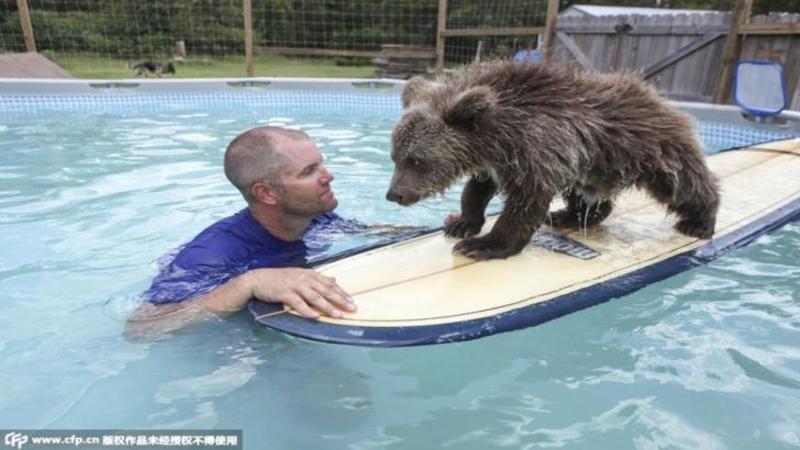 Cine nu ar vrea un asemenea ANIMAL de companie scump şi drăgălaş? Dar asta nu este nimic, aşteaptă să vezi animalele pe care le creşte acest om în CURTEA lui... sunt adorabile!