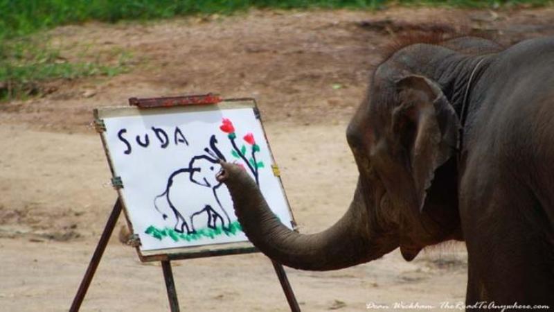 De NECREZUT ce fac aceşti elefanţi... sunt atât de inteligenţi încât pictează asemenea unui om! Te vor lăsa PERPLEX... WOW