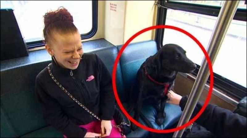 In fiecare zi acest câine se urcă în AUTOBUZ de unul singur: Când am văzut motivul pentru care face acest lucru... nu mi-a venit să cred!