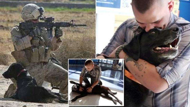 Acest SOLDAT a luptat alături de un câine care i-a SALVAT viaţa în război, iar de atunci nu s-au mai văzut cu anii: Când în sfârşit s-au întâlnit... Dumnezeule ce se întâmplă între cei doi! Mi-au dat lacrimile