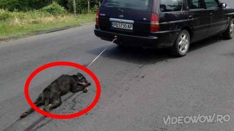 Au LEGAT un câine de o maşină şi l-au târât peste tot prin oraş şi când totul părea IADUL pe pământ pentru acest micuţ suflet chinuit... iată ce se întâmplă cu el! Doamne, nu îmi pot stăpânii lacrimile