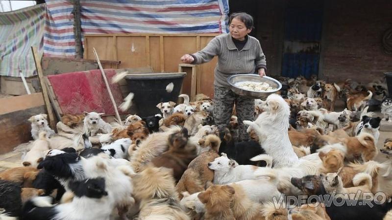 A salvat 200 de suflete de la măcel şi acum îi creşte pe toţi cu aceaşi iubire şi afecţiune! Iată ce înseamnă o zi din viaţa acestei femei cu 200 de câini de îngrijit...