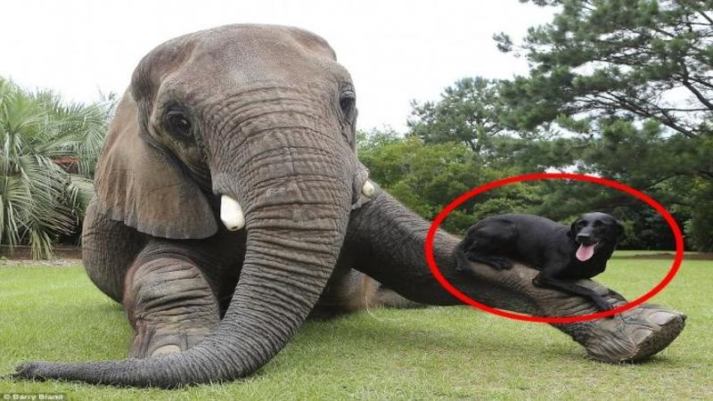 Sunt de nedespărţiţi, şi deşi sunt TOTAL diferiţi prietenia lor este una foarte specială! Când ai să vezi cât de bine se înteleg aceste animale nu îţi va vine să crezi! FANTASTIC