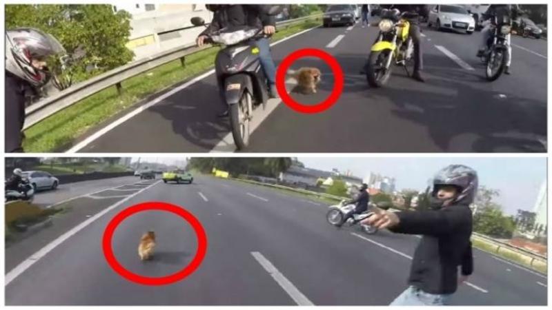 Au văzut un câine SPERIAT alergând pe autostradă printre zeci de maşini în viteză, dar nimeni nu se gândea că aceşti motociclişti vor face un gest INCREDIBIL pentru el: Uite ce EROI au fost aceşti oameni fantastici
