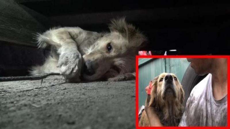 Sunt oameni care ar face orice pentru a SALVA un animal de la MOARTE, chiar şi să aştepte 3 zile pentru el pe străzi... Emoţionant ce fac aceşti oameni pentru bietele suflete abandonate pe străzi!