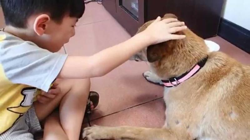 L-au văzut pe micuţ că stătea lângă bătrânul câine şi PLANGEA necontenit! Când mi-am dat seama ce avea să se întâmple... mi-au dat lacrimile şi mie de tristeţe! Dumnezeule ce zi tristă pentru acest biet copilaş