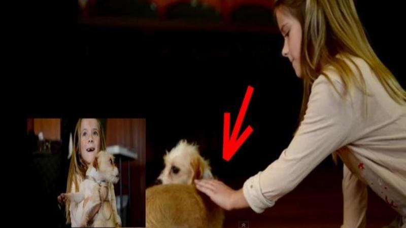 Micuţa fetiţă întinde mâna spre acest SUFLET abandonat şi maltratat de către oameni: Ce reacţie a avut este de nedescris... EMOTIONANT