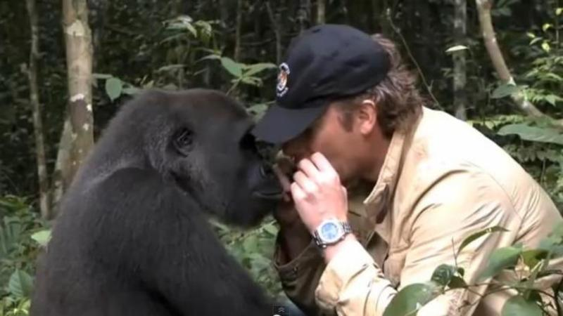 A salvat-o din mâinile BRACONIERILOR când era mică şi a eliberato în junglă: După 5 ani se reîntâlnesc din nou... ce a urmat este EMOTIONANT
