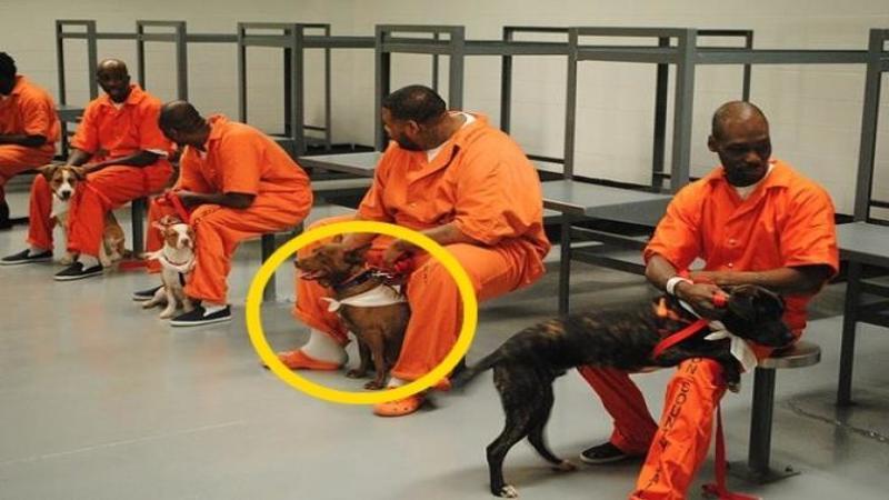 Este pur şi simplu incredibil ce se întâmplă în această INCHISOARE de maximă siguranţă! Prizonierilor le-au fost daţi câte un câine ca colegi de celulă... iar rezultatele sunt INCREDIBLE