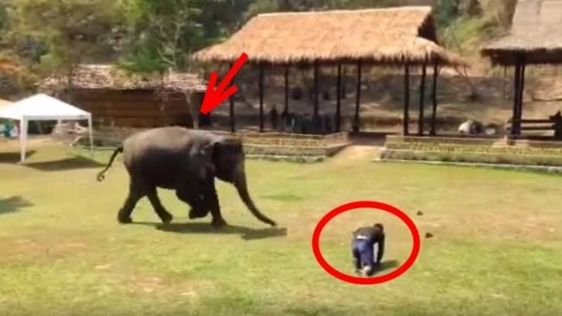 Ingrijitorul elefantului CADE la pământ ca secerat: Dar uite ce face acesta imediat ce îl vede... m-a lăsat fără cuvinte - Dumnezeule câtă iubire şi recunoştiinţă au aceste animale... De necrezut
