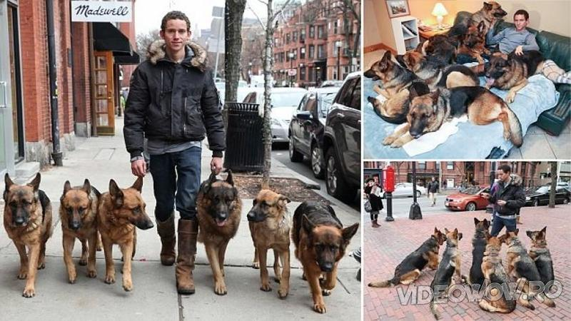 S-a aşezat lângă haita de câini LUPI şi le-a ordonat să stea unul lângă celălalt: Ce s-a întâmplat după câteva secunde este cu adevărat FORMIDABIL!