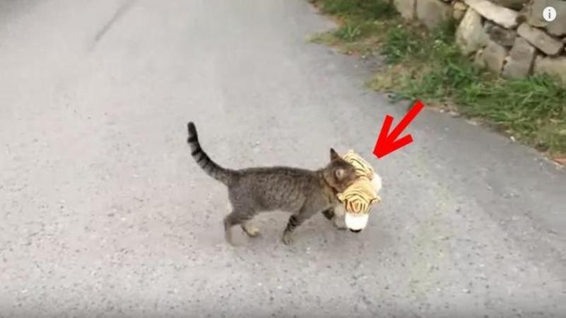Când a surprins această pisică că venea de la vecinu nu i-a venit să creadă ce ţinea în gură: Dar uite care era scopul furtului ei... Pur şi simplu ADORABIL!!