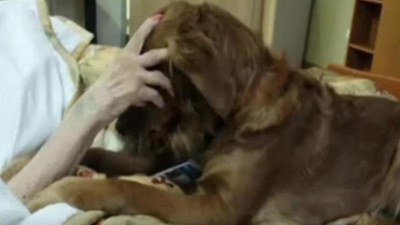 Aflat pe patul de spital în ultimele sale clipe din viaţă, acestă fiinţă muribundă îşi mângâia câinele pentru ultima dată! Ce reacţie are micuţul suflet îndurerat... mi-a atins sufletul cu căldură şi emoţie!