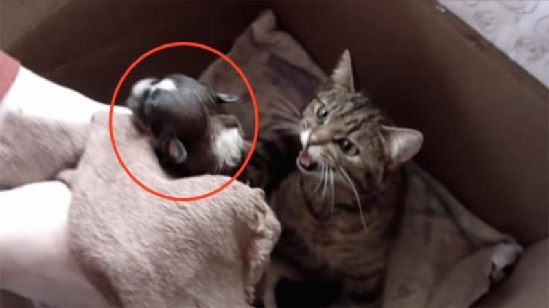 Au pus un PUI de câine abandonat abia născut lângă mămica pisică, ce se întâmplă când aceasta îl vede nu mi-a venit să cred... reacţia ei m-a emoţionat profund! Extraordinar