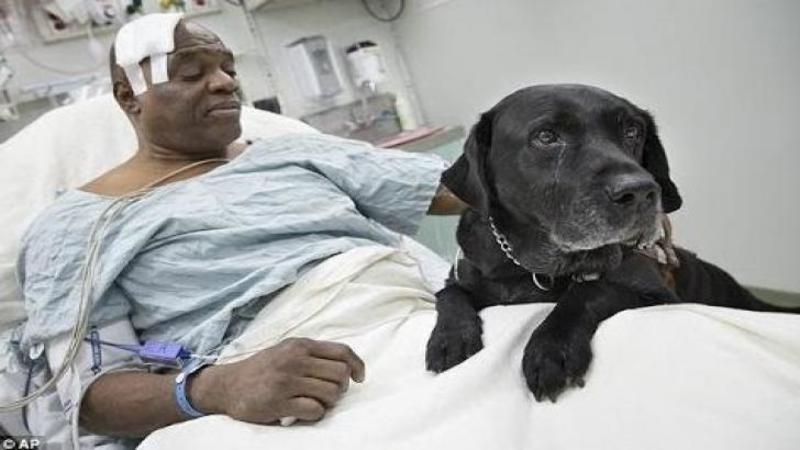 Acest câine ajutător pentru persoanele nevăzătoare şi-a RISCAT viaţa şi a făcut un gest pe care nici un om nu l-ar face: Când am văzut ce a făcut pentru stăpânul său mi-au dat lacrimile de bucurie... Dumnezeule