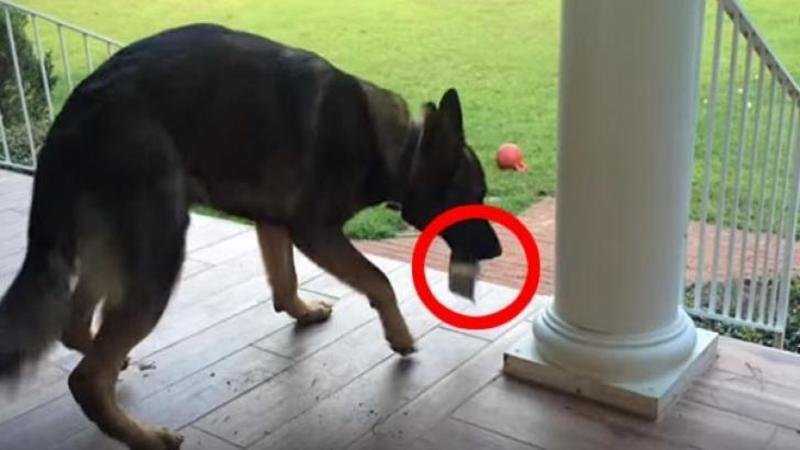Stăpâna câinelui îi spune acestuia că este foarte obosită datorită serviciului: Reacţia lui m-a făcut să râd cu lacrimi! Nu pot să cred ce s-a întâmplat apoi... Extraordinar
