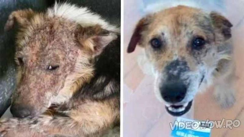 """Acest câine a fost adus la veterinar pentru a fi EUTANASIAT din cauza că era prea URAT: Dar ce s-a întâmplat acolo... îl poţi considera un miracol pentru micuţul nostru """"monstruleţ"""" pe care nimeni nu îl dorea!"""