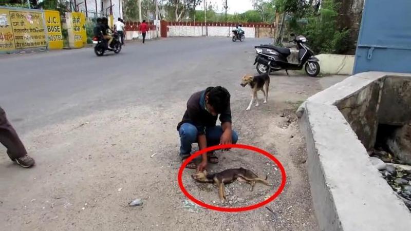 L-au găsit zăcând pe asfaltul încins aproape MORT, dar ce au făcut aceşti oameni cu suflet mare pentru el este mai mult decât o MINUNE! Iată ce înseamnă să iubeşti şi să ocroteşti animalele...