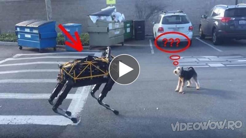 Toţi se mirau de CREATURA stranie, inclusiv câinele mic şi curios, dar iată ce se întâmplă cu bizarul ?obiect? la primul lătrat, parcă prinde viaţă exact asemenea unui animal... WOW