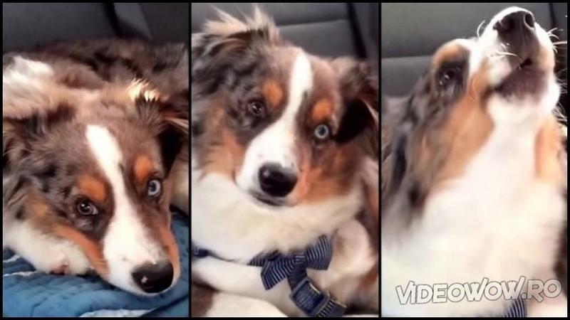 Micuţul dormea liniştit pe bancheta din spate a maşinii până când aude la RADIO melodia lui preferată: Ce reacţie a avut câinele te va lăsa cu dureri de burtă de la atâta râs...
