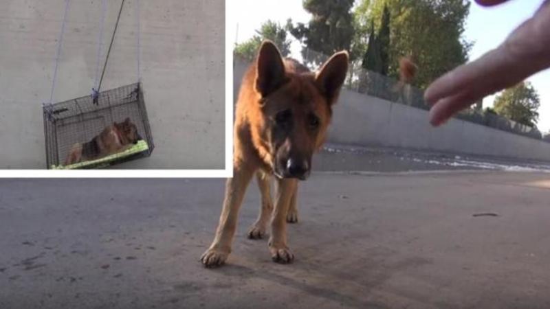 Acest câine a fost aruncat într-un CANAL al unui râu şi mânca doar ce i se arunca: Asta până când aceşti EROI salvatori au făcut ceva incredibil pentru el! Când ai să vezi SALVAREA lui, îţi va atinge sufletul