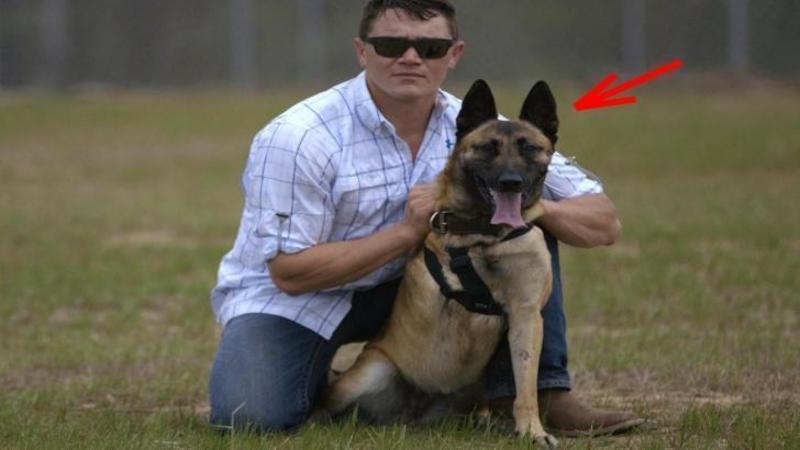Acest câine a încasat 4 gloanţe pentru omul de lângă el salvându-i viaţa! Cum a fost răsplătit pentru curajul şi devotamentul lui... m-a copleşit până la lacrimi! Un EROU în adevăratul sens al cuvântului