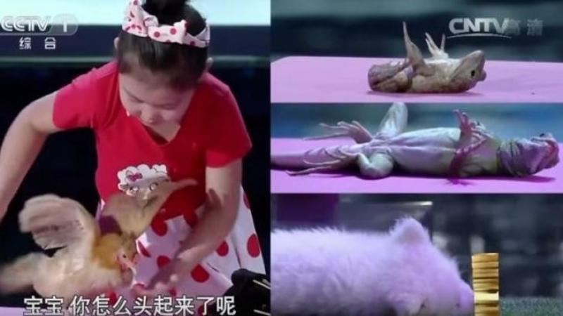 Incredibil ce face această fetiţă cu animalele: Hipnotitează şi ADOARME orice specie de animal cu ajutorul vocii sale! Nu este un truc sau vreo înşelătorie